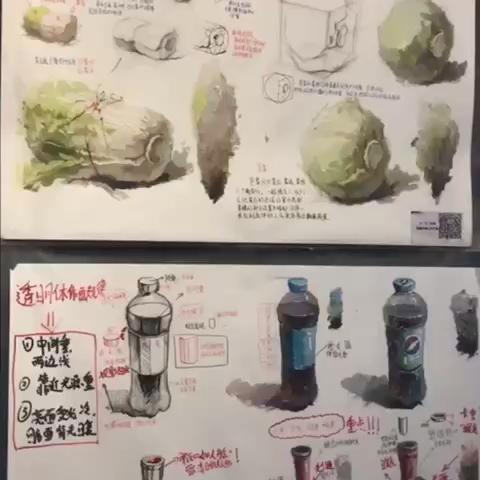 色彩静物//单体刻画//白菜 可乐 衬布 水桶