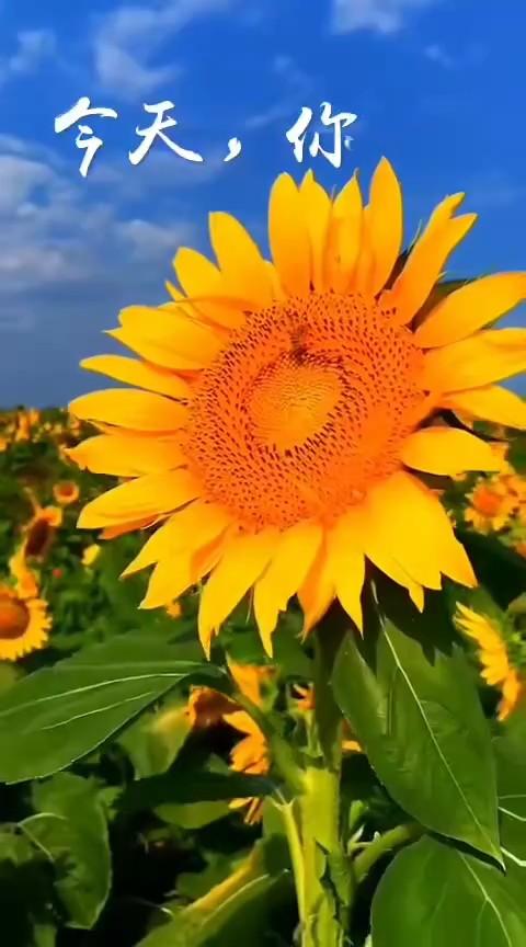 💞人有个好的心态,才能享受人生。感恩不是简单的报恩,是一种责任、自立、自尊和追求一种阳光人生的精神境界。也会每天有一个好心情,在生活中发现更多美好,用微笑对待生活,对待人生。早安![愉快]