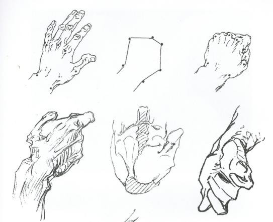 【高分干货】速写局部精讲之手部比例、肌肉、特征解析