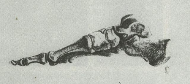 【高分干货】速写局部精讲之足部骨骼、肌肉及基本形态