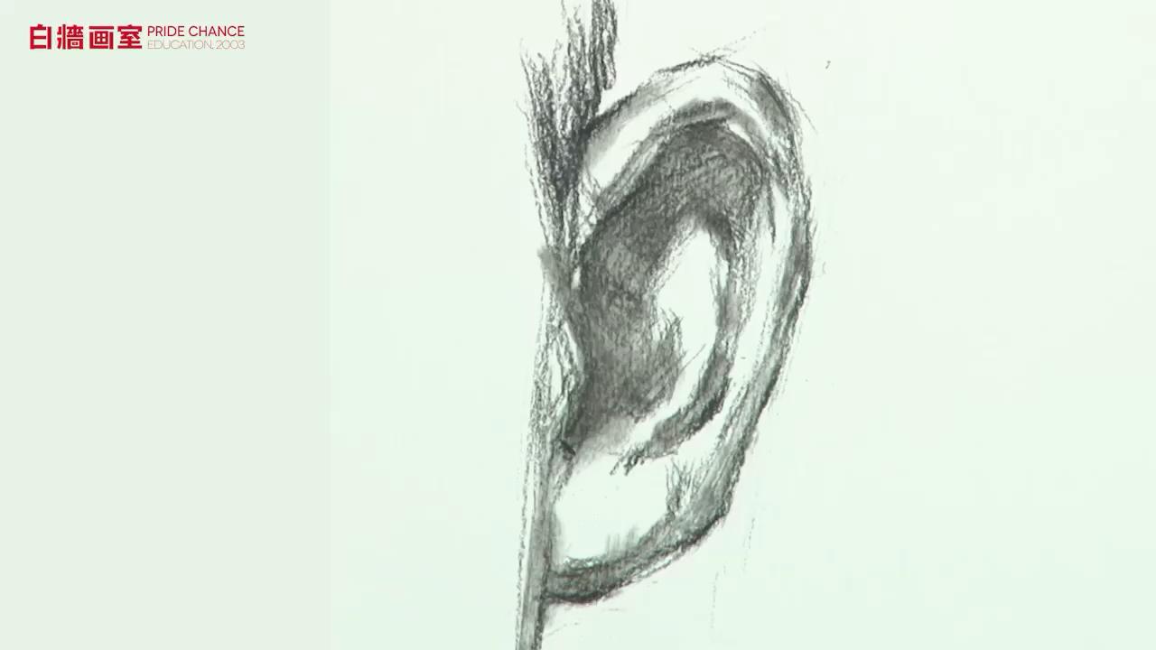 【高考美術培訓班】素描-五官-耳朵(二)