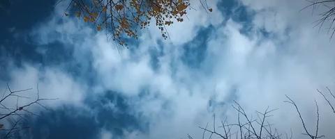 雨打秋叶黄 画室外的美景🍃