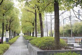 武汉青桐教育校园图6