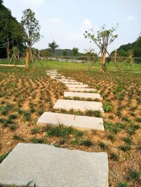 通向茶园的石阶小路