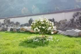 杭州将军画室图8