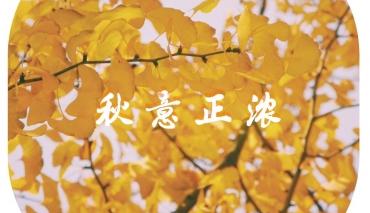 【官宣!!】满园秋色关不住-正向银湖校区是这样的 !!!